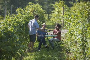 couple, romantic, wine tasting in the vineyards, Michigan Sparkling wine, Mawby